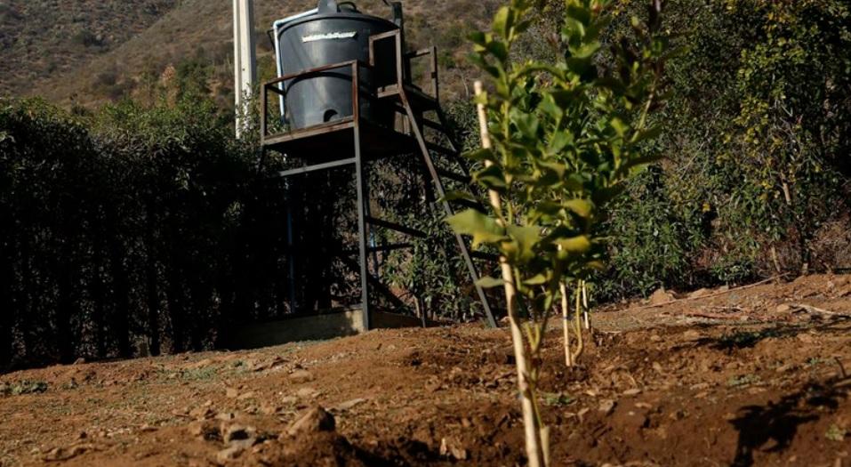 Escasez hídrica: Ministra de Agricultura no descarta decretar emergencia agrícola en varias regiones